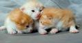 Kittens-Cute